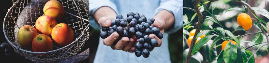 cold-treatment, fruit logistics